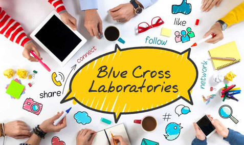 C Com Digital bags media mandate of Blue Cross Laboratories